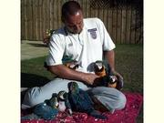 Tame parrots and fertile eggs for Sale